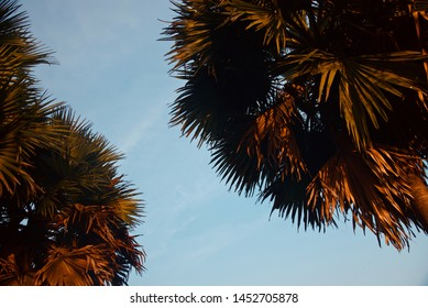 Parts of palm tree leaves with sky background photo