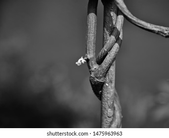 Parts of tree branch with white small flowers photo