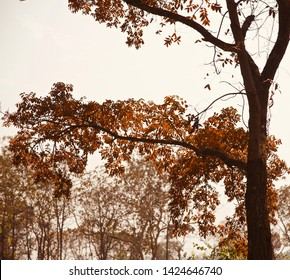 Parts of a tree with orange leaves in the autumn season