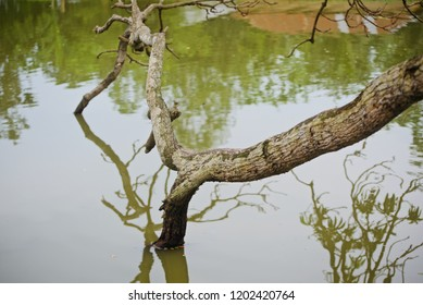 Parts of a tree in the water of a pond unique photo