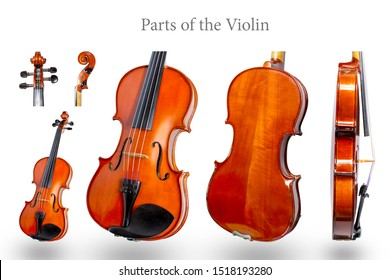Parts of the violin on white background.Violin isolate and classic violin.