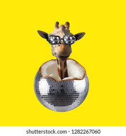 Party collage. Concept Giraffe peeking out of Coconut disco ball on yellow background.