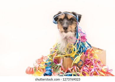 Party Dog. Jack Russell ready for carnival