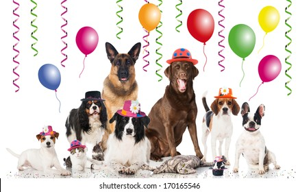 Party pets