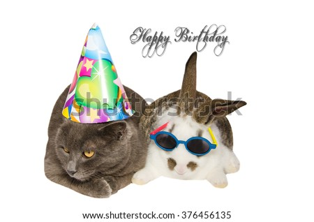 Party Pets Funny Cat Bunny Happy Stock Photo Edit Now 376456135