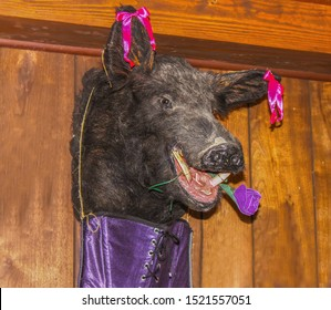 Party Pig....Mangy looking stuffed boars head hangs on panelled wall with corset underneath and flower in mouth and bows on ears