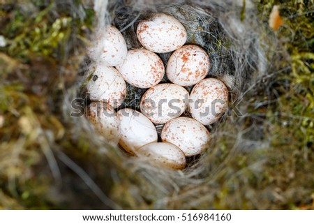 Parus major The nest