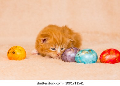 Paschal eggs with little red cat main coon