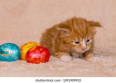 Paschal eggs with littler red cat maine coon