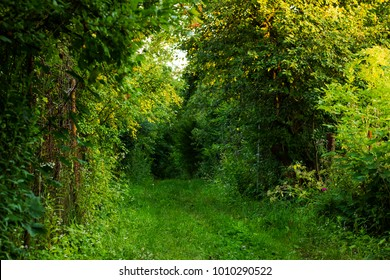 Passage in summer forest. Living arch of green trees near metal old fence, sunny light day