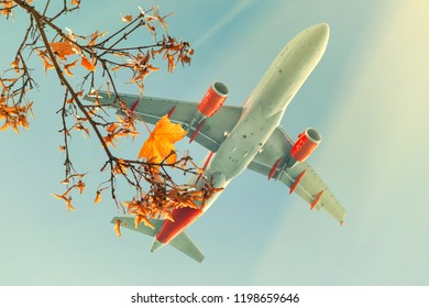 Passenger airplane flying over autumn maple