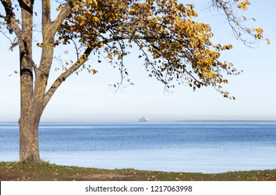 Passenger ferry /ship on horizon, view from shore, golden leaves on tree at autumn.