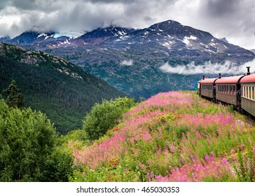 Passenger train moving through a field of pink and red wildflowers with a glacier in the background near Skagway, AK