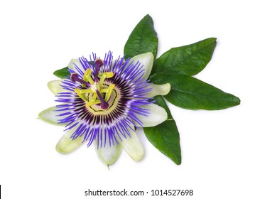 Passiflora (passionflower) isolated on white background. Big beautiful flower.