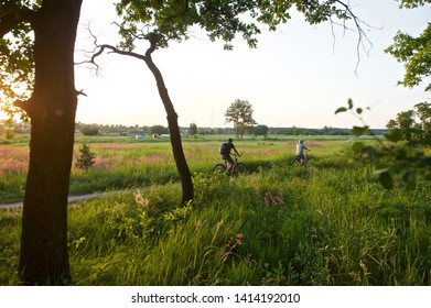 Passing cyclists in the background of the landscape, floodplains of the river, the setting sun, a warm summer evening, in the foreground are young oaks.