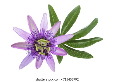 passion flower isolated on whitebackground