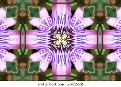 Passion flower, spring season, background, flowers, flower, nature, floral, garden, summer, beautiful, landscape, pink, blossom, white, tree, green, sun, field, beauty, natural, plant, botany,blooming