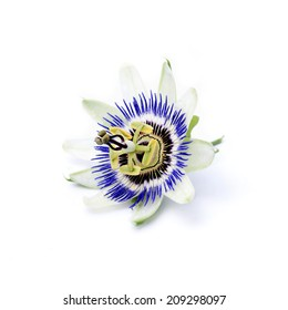 Passion fruit flower isolated on a white background