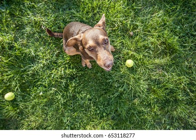 Passionate, joyful and enthusiastic dog  waiting for owner to throw ball