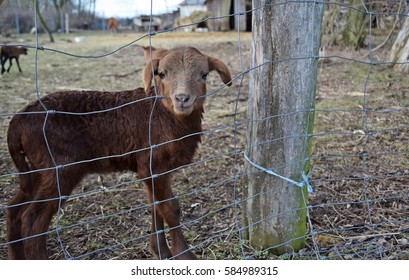 a Passover nibbling on the fence