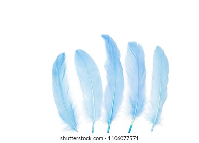 Pastel blue feathers on a white background