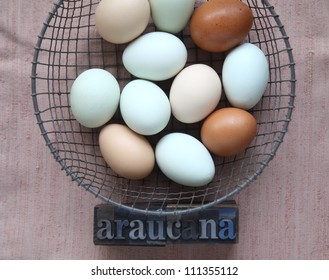 pastel and brown eggs in a wire basket with the word araucana in old metal type