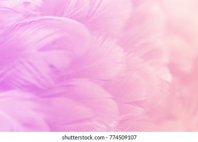 Pastel color of chicken feathers in soft and blur style for the background