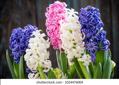 hyacinth images stock photos vectors shutterstock