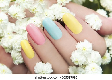 Pastel manicure on female hand with flower Hipsofilas.