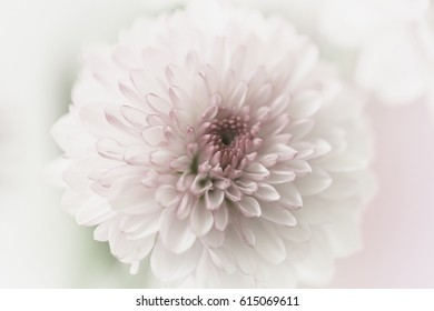 A pastel  pink flower with a pink and green blurred background.