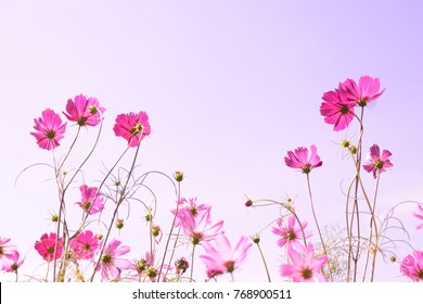 pastel pink flowers field and sky background