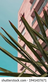 Pastel pink residential apartment building against clear blue sky shown through green palmleaves, tropical hotel cityscape, palmtree details, coastal living and life near   beach, urban seaside