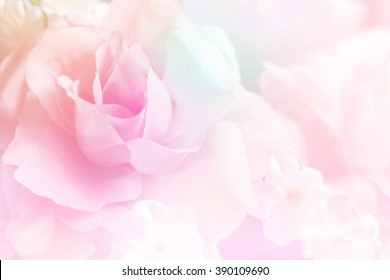 Pastel roses in soft color for background