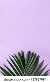 Pastel Tropical Background
