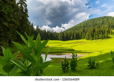 Pastoral scenery with beautiful green foliage in summer, rain clouds and a stream in a meadow, in the Transylvanian Alps