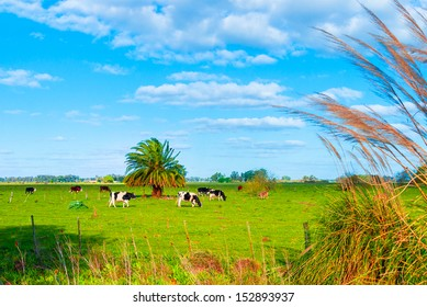 Pasture with cows in Uribelarrea, Argentina