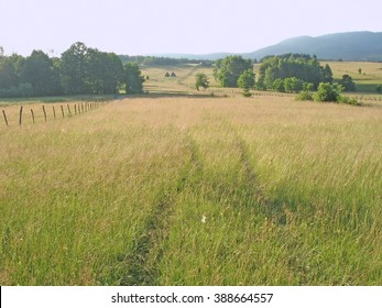 pasture, forest, track of path through meadow