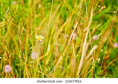 Pasture grass for use as a background