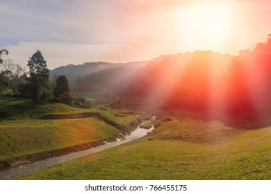 Pasture in the jungle with streams, landscape  nature background, for graphic background.