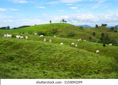 Pasture land in Chiriqui province, Panama
