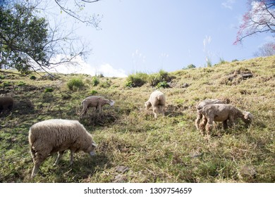 Pasture landscape on the mountain
