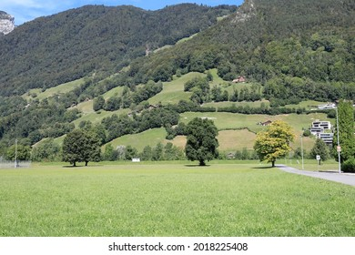 Pasture and a little further is seen the slope overgrown with forest. This is seen here in Brunnen in the canton of Schwyz in Switzerland.
