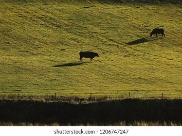 Pasture at morning