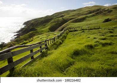 Pasture - New Zealand