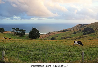 Pasture on Pacific - south island, New Zealand