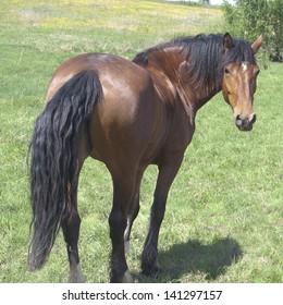 Pasture, summer day. bay horse.