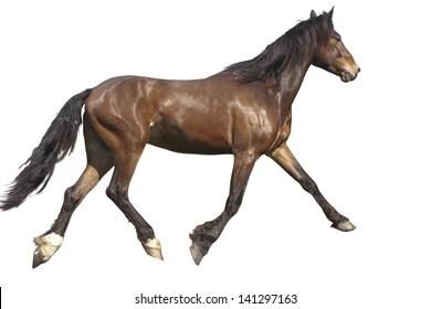Pasture, summer day. bay horse runs