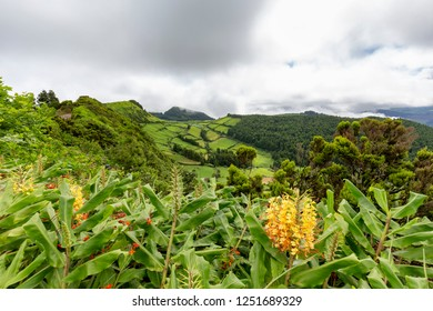Pastures and tropical plants on the rim of the Sete Cidades caldera on Sao Miguel.