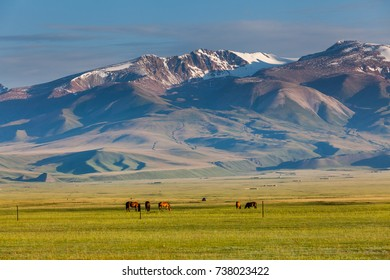 The pastures under the snowy mountains