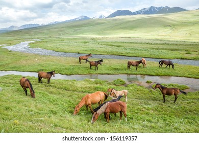 Pasturing horses and foals in mountains